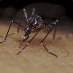 why mosquitoes like you better